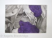 Tulipmania 19 - Etching - Purple