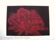 Cool Cystal Aquatint Etching Burgandy