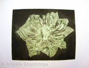 Caspin Dark Aquatint Etching Lt Green