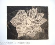 Caspin Dark Aquatint Etching Peach