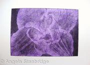 Compostella Tulip Aquatint Etching Lilac