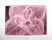 Compostella Tulip Aquatint Etching Pink