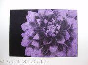 Dahlia1 lilac