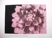 Dahlia1 pink