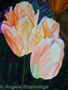 Orange Emperor Tulip 1