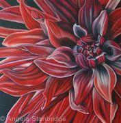 Red Dahilia
