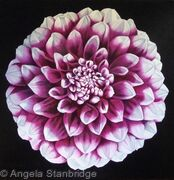 Pink Dahlia - SOLD