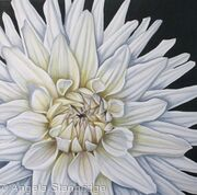 Dahlia White Moonlight