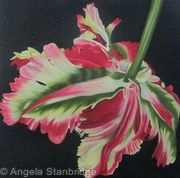 Double Flaming Parrot Tulip