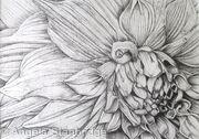 B/W Dahlia Flower 4 - SOLD