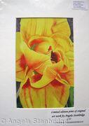 Compostella Tulip - Print