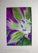 Nightrider Tulip - Print