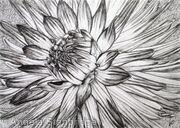 B/W Dahlia Flower 6