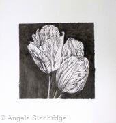 B/W Tulips 1