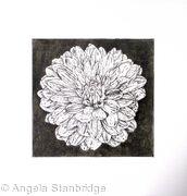 B/W Dahlia Flower 7