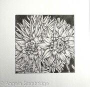 B/W Dahlia Flower 8