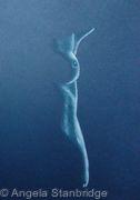Nude 19 - Blue