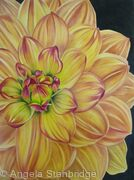 Dahlia Pam Howden - Medium Greetings Card