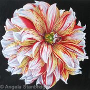 Dahlia Caribbean Fantasy - Square Greetings Card