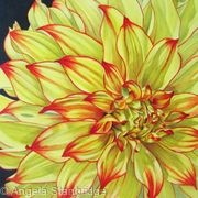 Dahlia Lady Darlene - Square Greetings Card