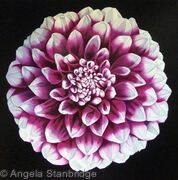 Pink Dahlia - Square Greetings Card