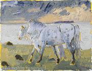 Connemara Ponies Horn Head