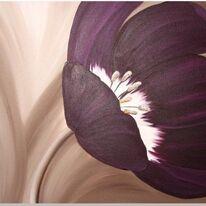 Velvet Tulip