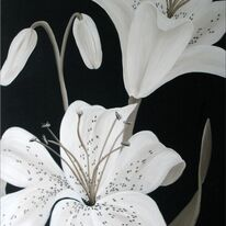 Ivory Lilies