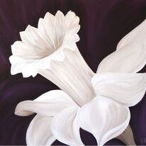 Daffodil Diva