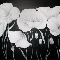 Cotton Poppies