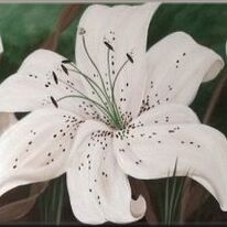 Tracy's Lilies