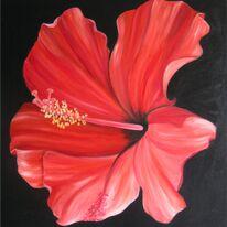 Spanish Hibiscus