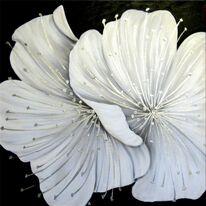 Frosty Blossom