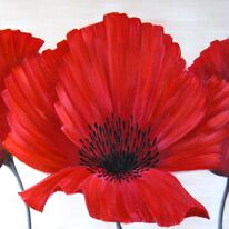 Linen Poppies 1