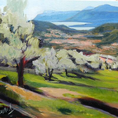 Les Ardrets Olive Grove