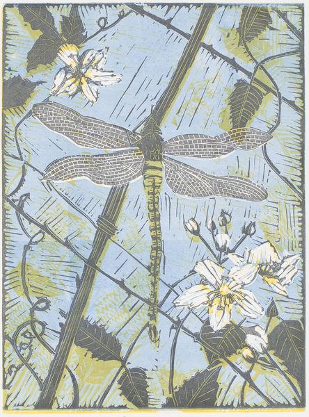 Dragonfly on Bramble