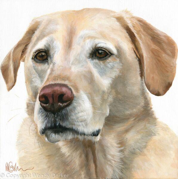Pale Labrador