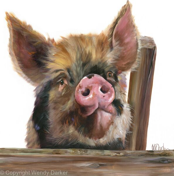 Belle Pig - Limited edition (150) box canvas print