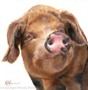 Oxford Pig