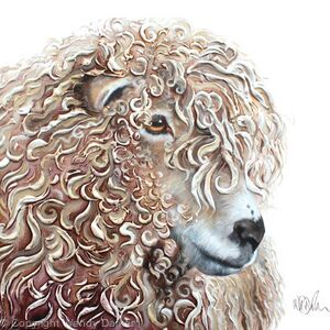 Curly-sheep