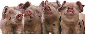 Hogs and Kisses II