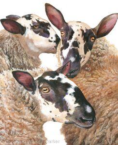Ewe, me and her