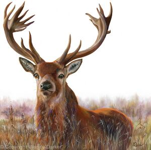 Stag in grass