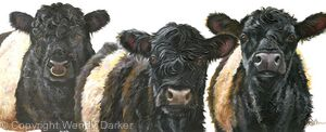 Belties