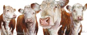 Group of Herefords