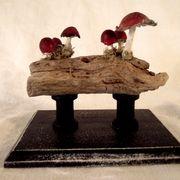 Cornish Driftwood Fungi III by Kuriology