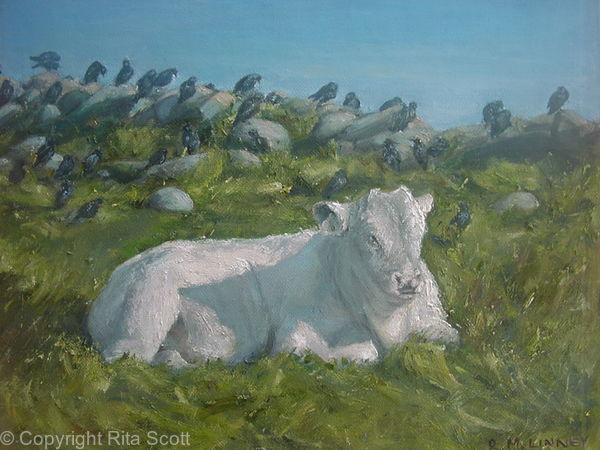 Little White Bull and Starlings