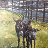 Donkey and foal at Ennistymon