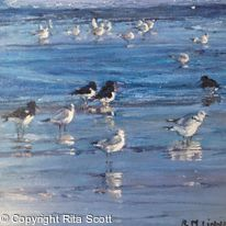 Oystercatchers and Sanderlings at Quilty
