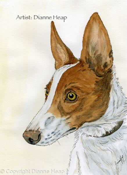 Alert No.7031 Podenco Dog Print